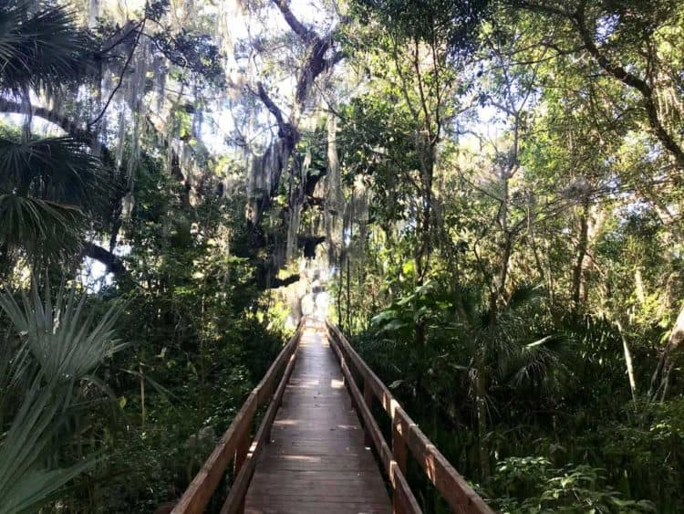 Emerson Point Preserve: A boardwalk takes you over the jungly Portavant Temple Mound, an archaeological site listed on the U.S. National Register of Historic Places. (Photo: Bonnie Gross)