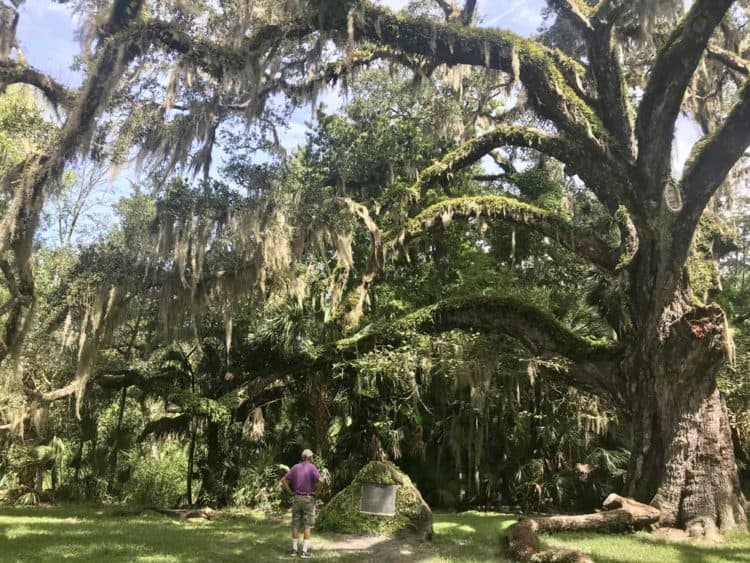 At Bulow Creek State Park, the magnificent Fairchild live oak has resided over hurricanes, floods, wars and everything else that has happened in the last 400 to 600 years. (Photo: Bonnie Gross)