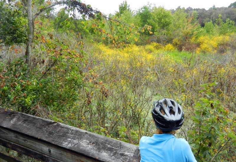 Gainesville-Hawthorne Trail with view of woodsy scenery