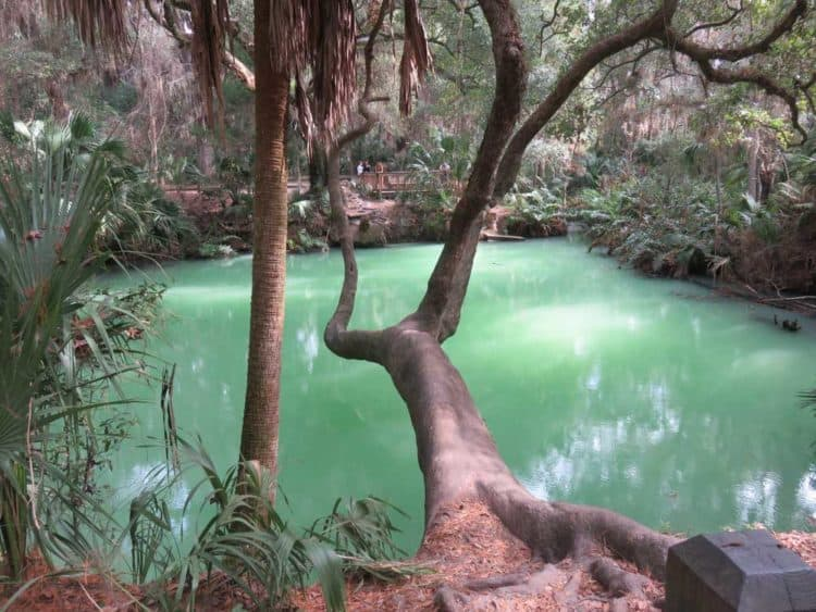 Green Spring Park anchors one end of the East Central Regional Rail Trail. It's worth a stop: It's milky green waters are stunning. (Photo: David Blasco)