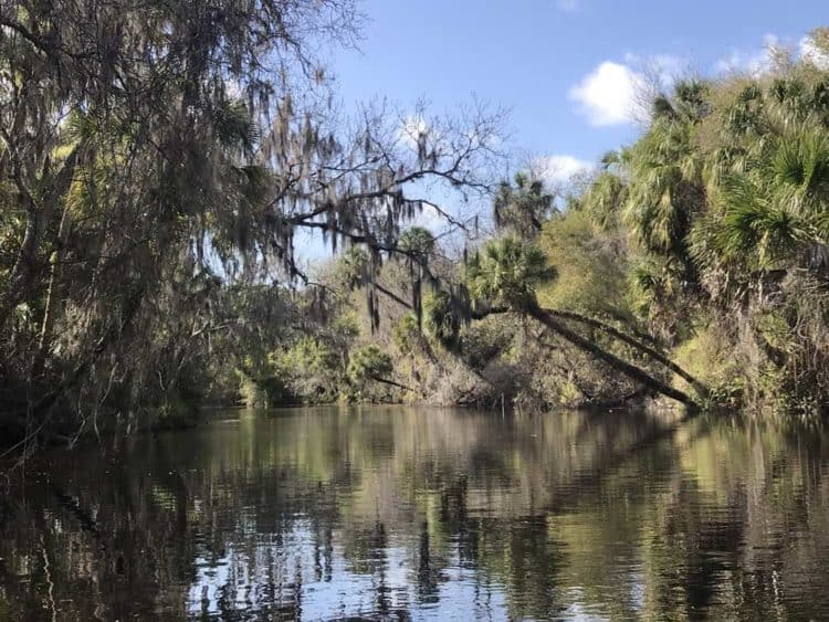 The Upper Manatee River east of Bradenton is wild and scenic. (Photo: Bonnie Gross)
