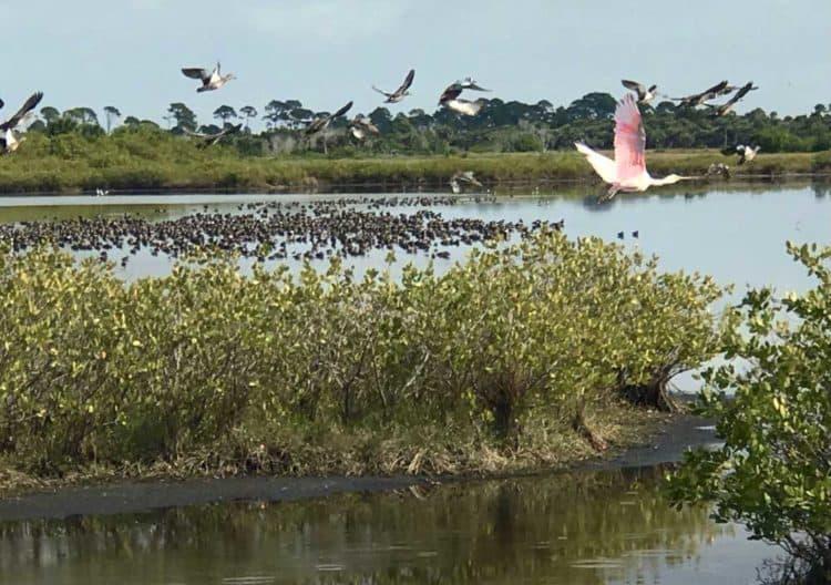 Merritt Island National Wildlife Refuge: Birds flock to wetlands along Blackpoint Wildlife Drive. (Photo: Bonnie Gross)