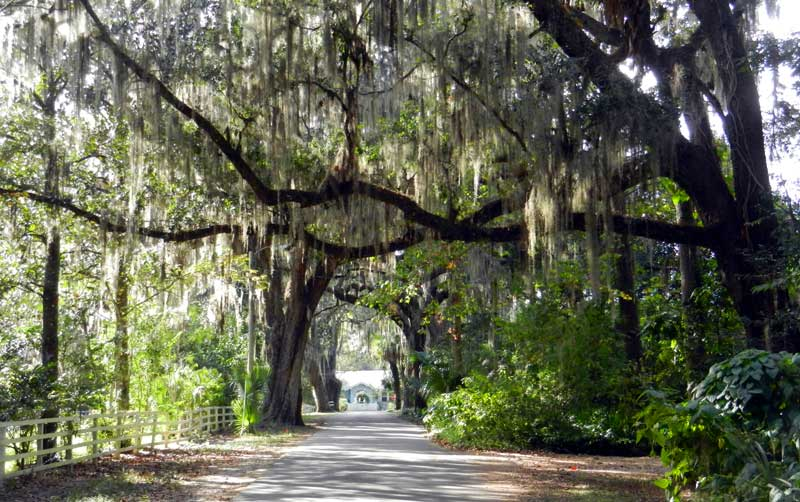 I-75 in Florida: This scene, of oak trees in Micanopy, is within 10 minutes of I-75 exit.. (Photo: Bonnie Gross)