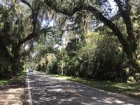 The Ormond Scenic Loop Trail links Bulow Creek State Park to three other state parks while leading you on a gorgeous route under a canopy of trees. (Photo: Bonnie Gross)