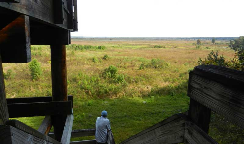 Observation tower on the south end of Paynes Prairie Preserve State Park near Gainesville.