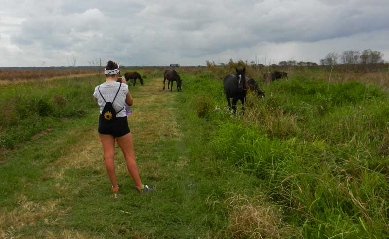 Paynes Prairie wild horses Florida hiking trails: 5 favorites for fall hiking