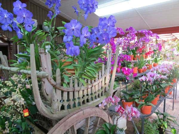 Displays are over the top at R F Orchids in the Redland. (Photo: Bonnie Gross)