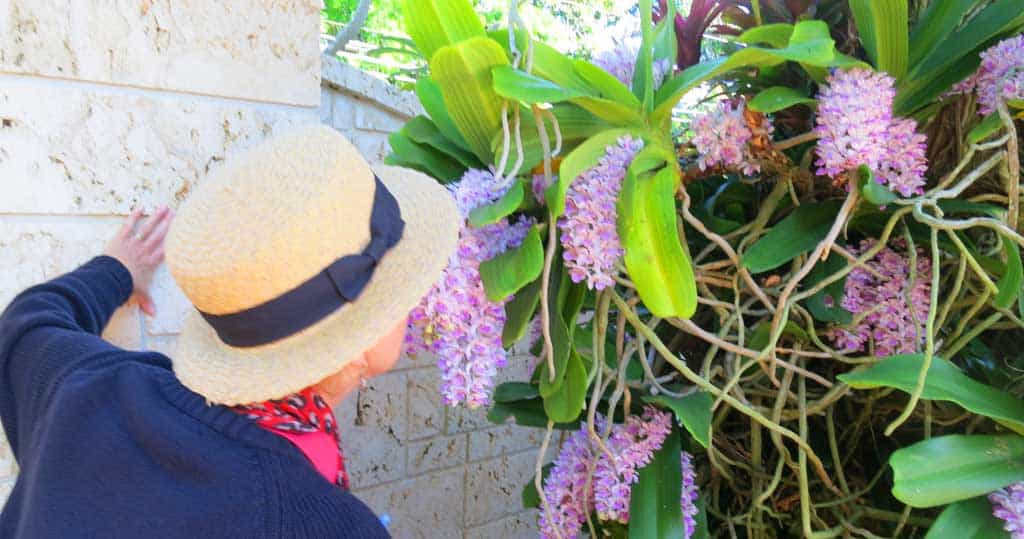 RF Orchids fragrant Love orchids? Free tours at R F Orchids in the Redland are a must