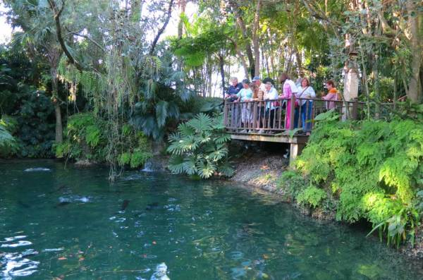 On the grounds of Robert Fuchs' home is a fern-rimmed pond with an alligator, South American pacu fish and exotic catfish. It is one of the surprising part of the R F Orchids tours. (Photo: Bonnie Gross)