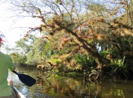 Scene from kayaking St. Lucie River South Fork. (Photo: Erin Blasco)