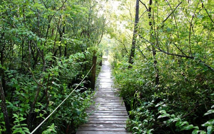 Florida hiking trails: Tiger Creek Preserve. (Photo courtesy the Nature Conservancy.)