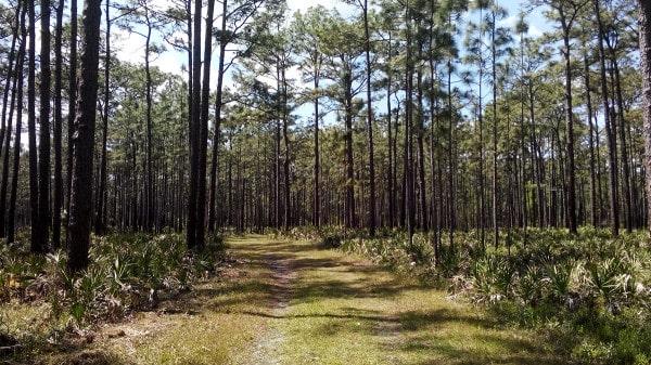 Trail at Colt Creek State Park