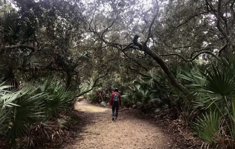 Along Florida A1A, you can stop at Jungle Hut Park for a one-mile hiking loop through hardwood forest. (Photo: Bonnie Gross)