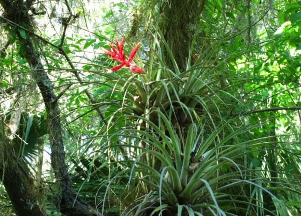 Airplants decorated the cypress and oak trees while we were kayaking Arbuckle Creek.