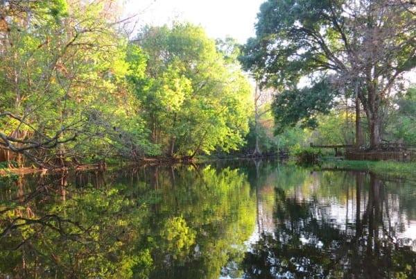 Late afternoon on Arbuckle Creek near Avon Park.