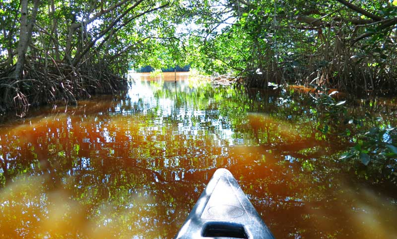 canoe mangrove tunnel to mu Canoe or kayak Everglades National Park: Coot Bay and Mud Lake trail