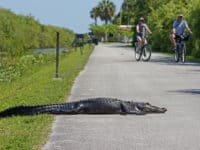 canstockphoto34626994 Shark Valley at Everglades National Park: Great bike trail; terrific wildlife
