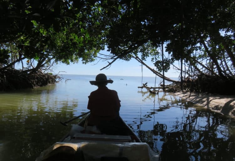 On our canoe trip to East Cape Sable, we explored some of the jungly canals that were cut into the coastline a hundred years ago. (Photo: David Blasco)