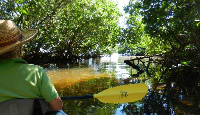 Kayaking Fort Myers area: Mangrove tunnel along Calusa Blueway in Captiva. (Photo: David Blasco)