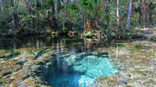Chassahowitzka River, one of the Seven Sisters Springs.