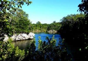 Lake at Dagny Johnson Key Largo Hammock State Park