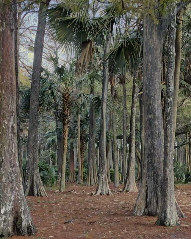 easterlin park by stella oliver