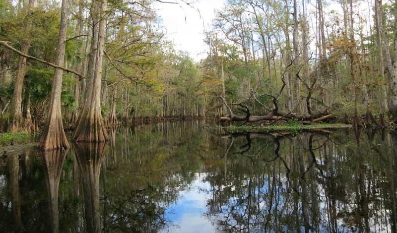 Reflections along Fisheating Creek. (Photo: Bonnie Gross)