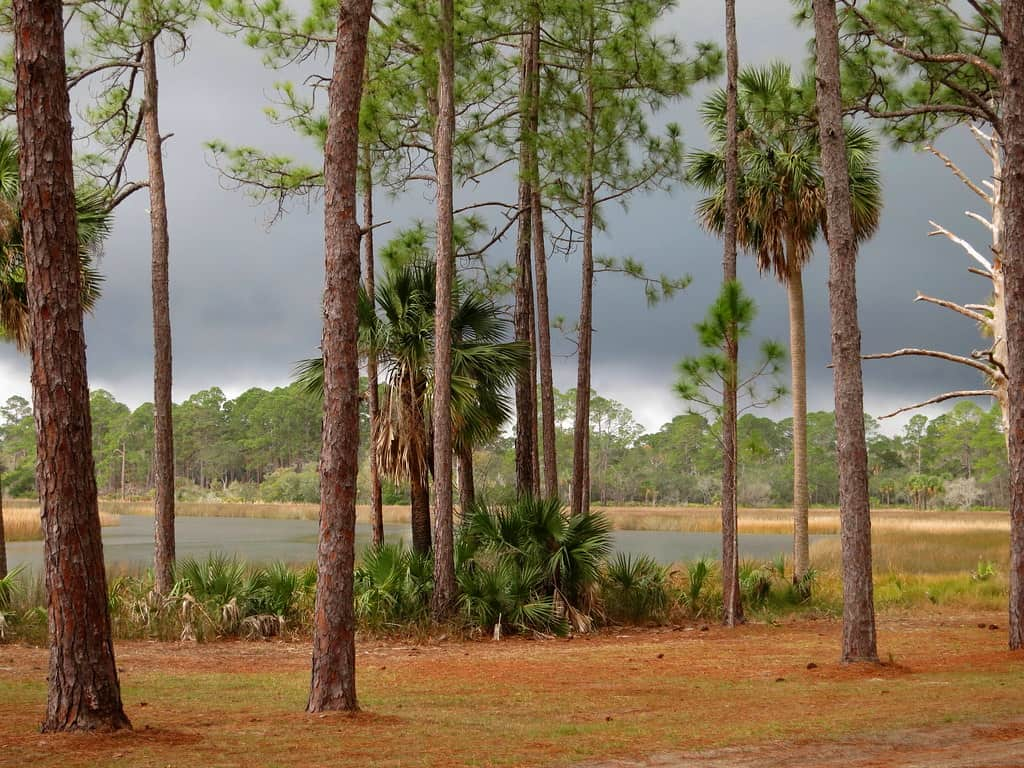 faver dykes by paul comstock 8 inviting campgrounds at Florida State Parks along I-95