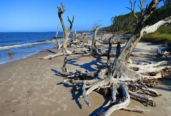 Boneyard Beach inside Big Talbot State Park delights photographers and beach walkers.