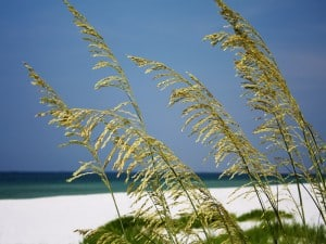 The beach at Fort Pickens
