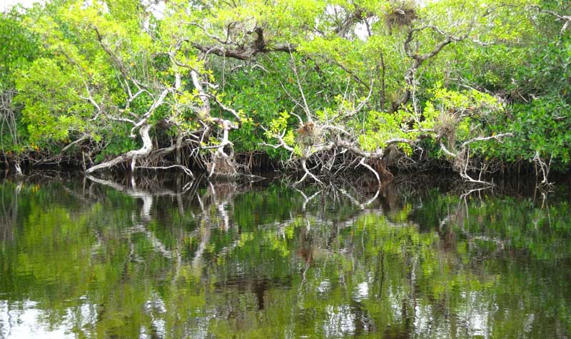 Halfway Creek, Everglades National Park, off the Tamiami Trail