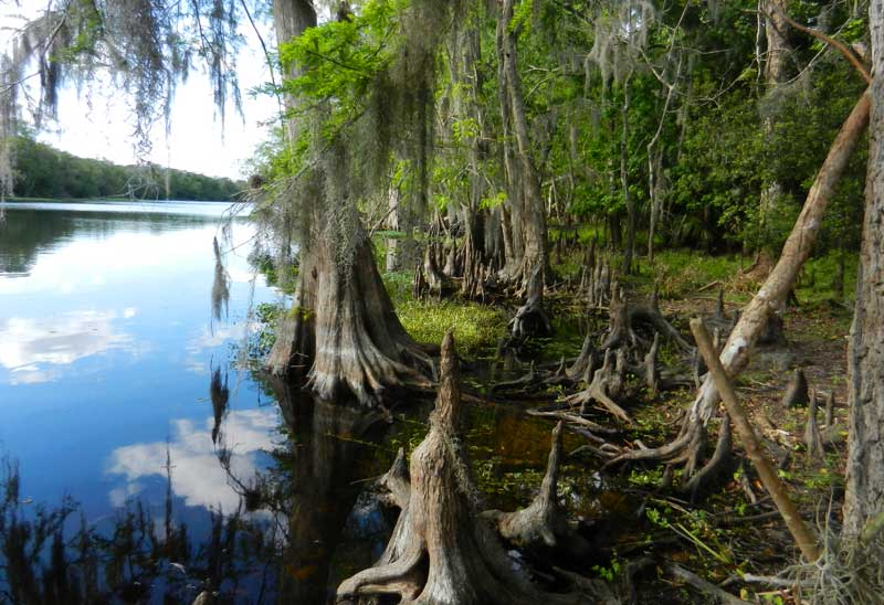 The Hontoon Dead River is part of a great kayak or canoe trail around Hontoon Island State Park. This view with its cypress knees is from the Hammock Hiking Trail. (Photo: Bonnie Gross)
