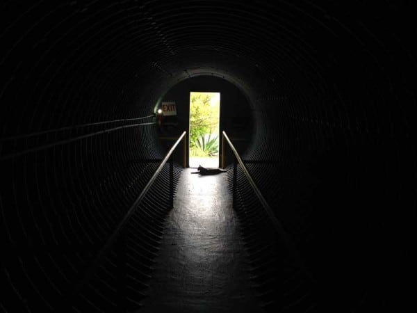 You enter the bunker through a tunnel. The cat at the end is either Jack, Jackie or Marilyn, the three feral cats who live on the island.