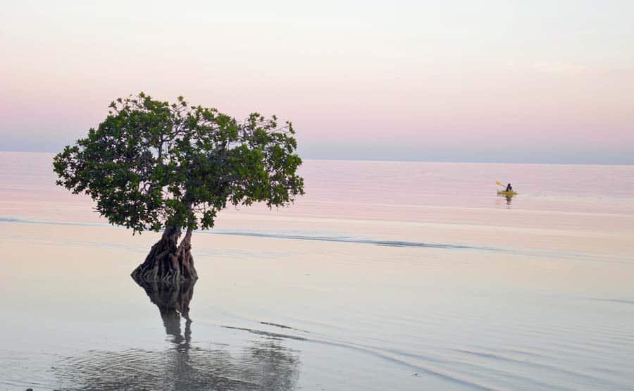 Morning paddle kayaking the Florida Keys at Long Key State Park