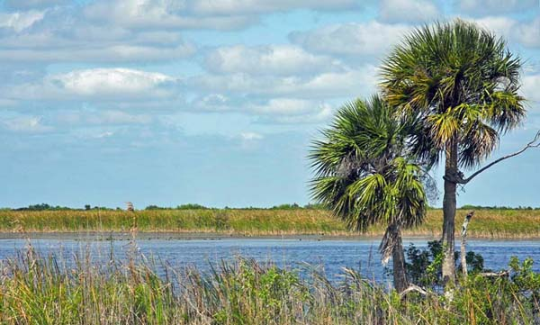 View from Levee 39 of the Loxahatchee National Wildlife Refuge