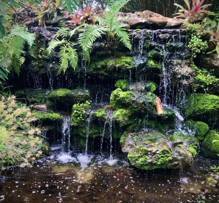 Waterfalls at McKee Botanical Garden are part of its architectural heritage but also managed by a sophisticated system of water management system that runs 800,000 of well water through the ponds and streams. (Photo: Bonnie Gross)