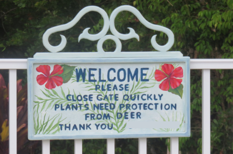 """Sign reads """"Please close gate quickly. Plants need protection from deer."""" On No Name Key, there are 43 houses and lots of Key deer, who relish the tasty landscaping around the houses. (Photo: David Blasco)"""