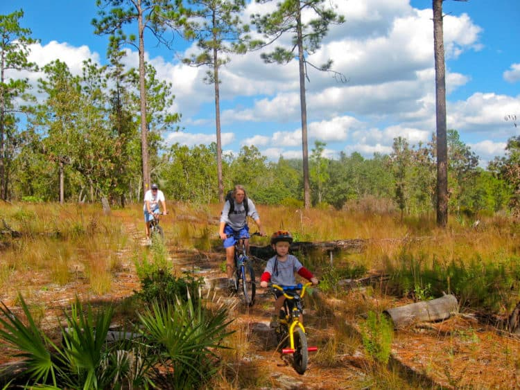 ocala forest bicycle 6 Things to Do in Ocala National Forest
