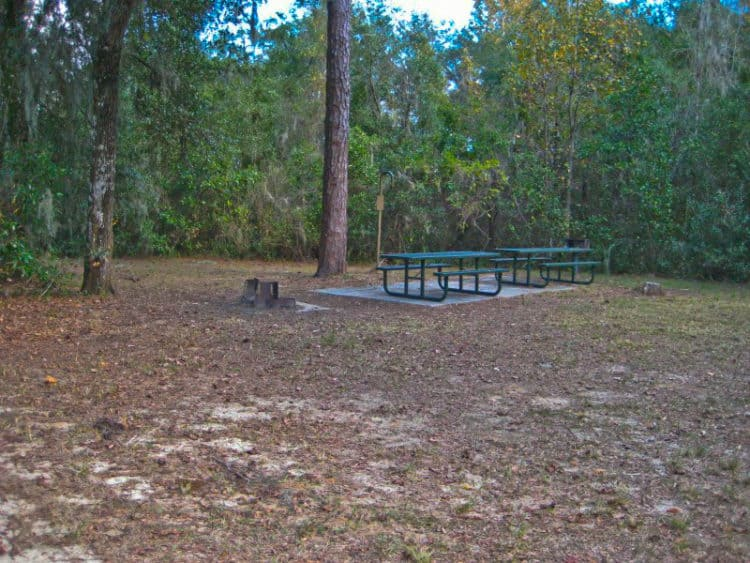 ocalanf fore lake 15 campgrounds for exploring Ocala National Forest