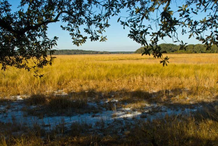 ocalanf hopkins prairie 15 campgrounds for exploring Ocala National Forest