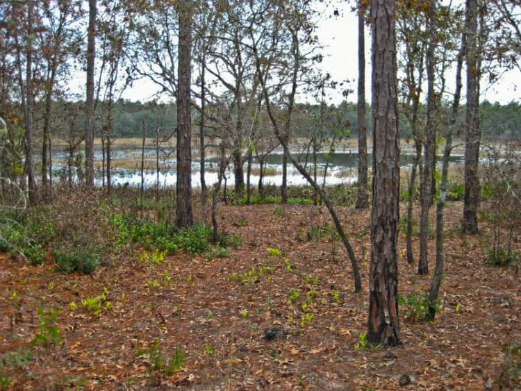 ocalanf shanty pond 15 campgrounds for exploring Ocala National Forest