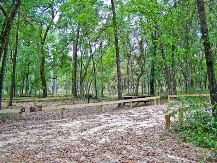 onf lake delancey 15 campgrounds for exploring Ocala National Forest