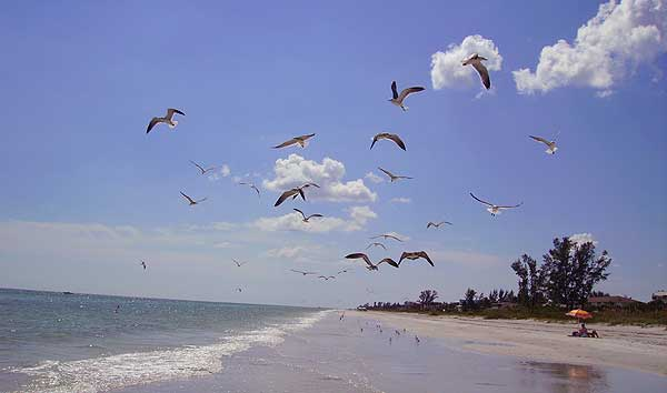 sanibel beach with birds Biking Sanibel Island: Bicycle trails take you to all the best spots