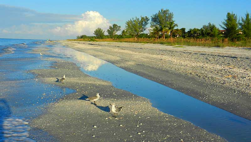 sanibel beach What makes Sanibel special – and 9 ways to experience it