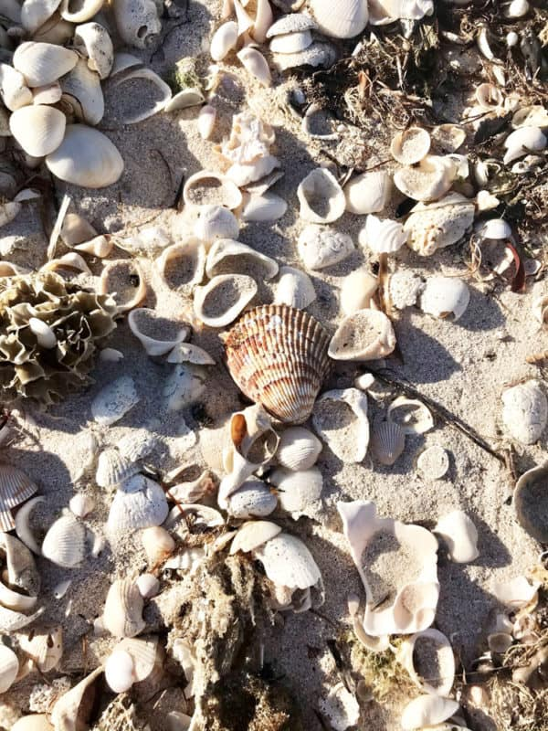 The East Cape Sable beach was composed of course sand and so many seashells. (Photo: Bonnie Gross)