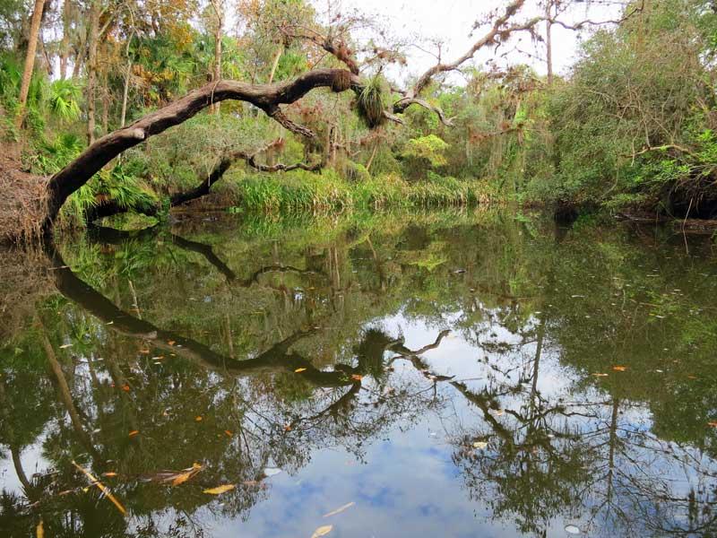 shell creek oak tree Kayak Shell Creek for one of the prettiest kayak trails you've never heard of