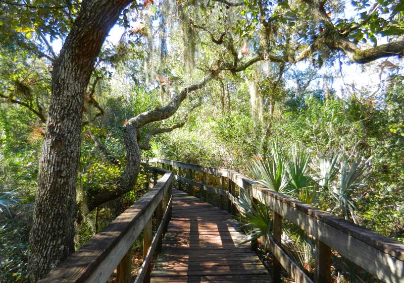 Boardwalk at Turkey Creek Sanctuary