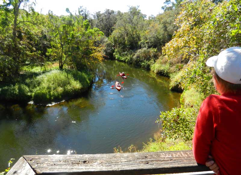 turkey creek view from abov Lovely Turkey Creek in Palm Bay combines kayaking & hiking