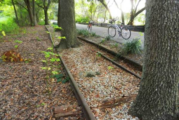 The old rails parallel the West Orange Trail, but it's clear they haven't been used by trains in awhile.
